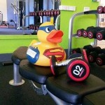 fakenham sports duck